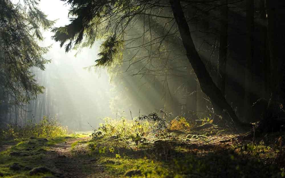 Bosques de Teutoburgo